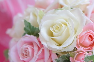 rose_temp3